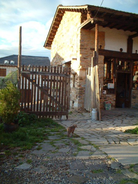 Cat at Villafranca