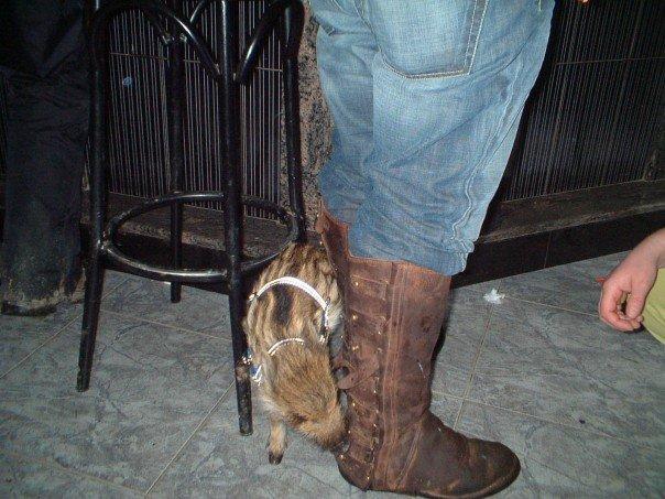 Wild boarlet