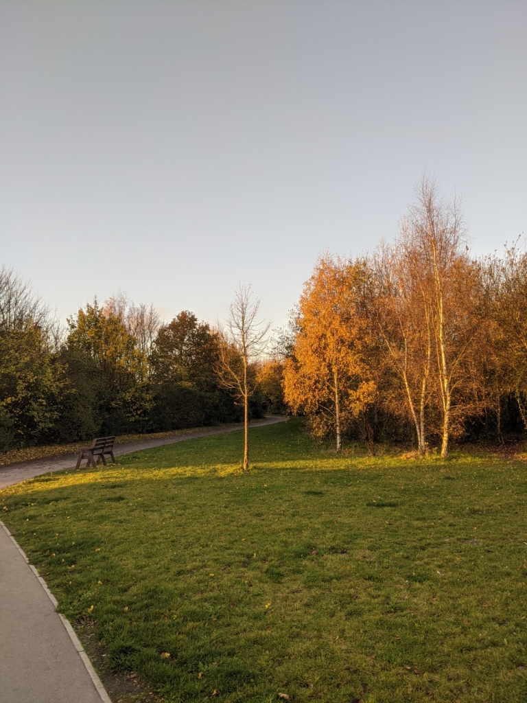 A tarmac path leading out of sight between trees. A streak of sunlight breaks across a grassy area and illuminates three of the trees.