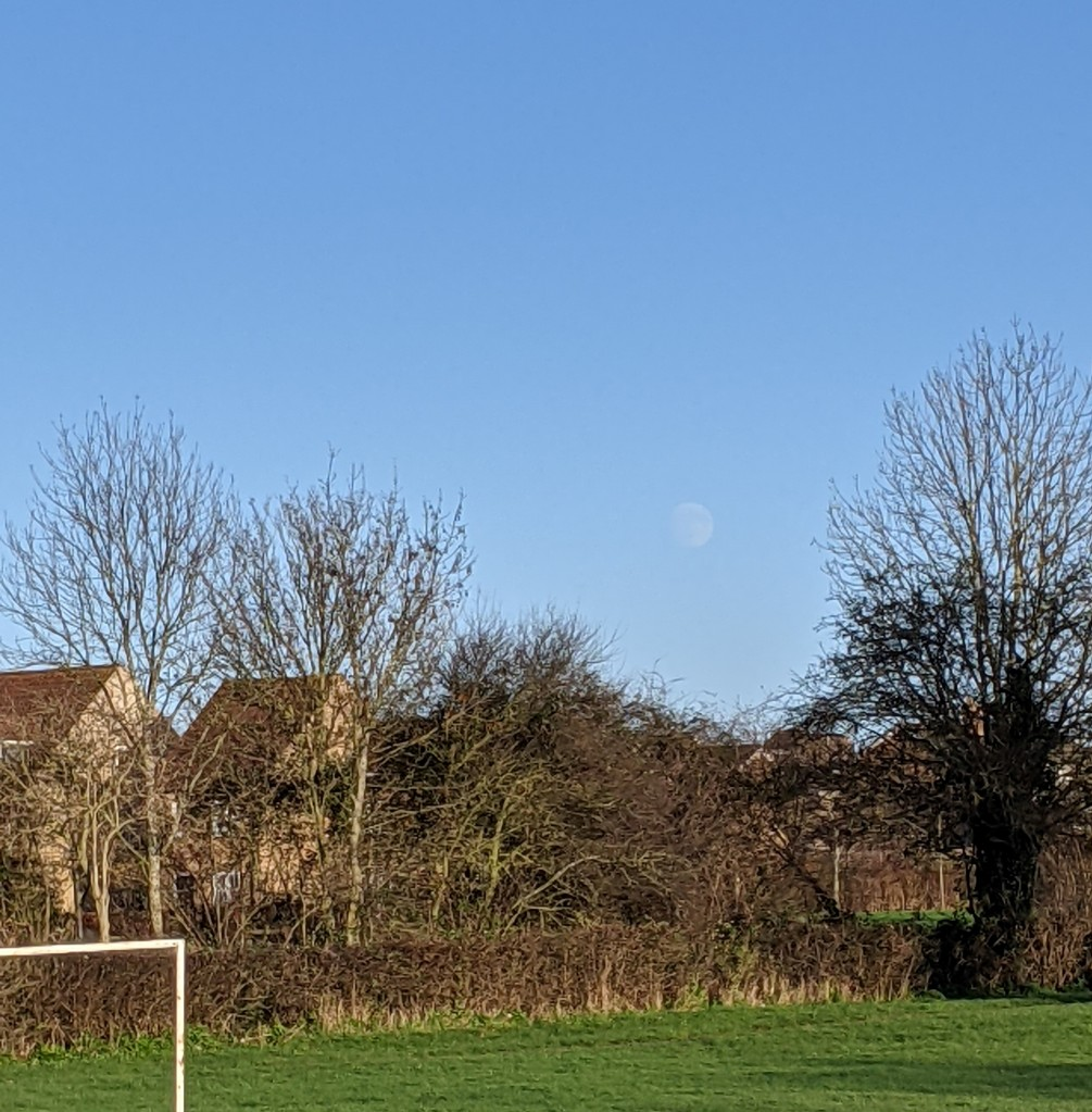 blue sky, with a waxing gibbous moon large but faint in a gap between trees