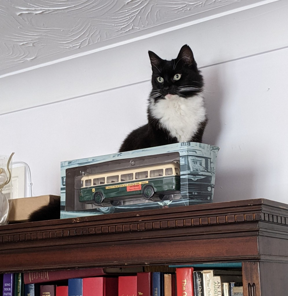 Fluffy black and white cat seated on top of a bookcase, in front of a model bus